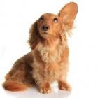Péče o uši
