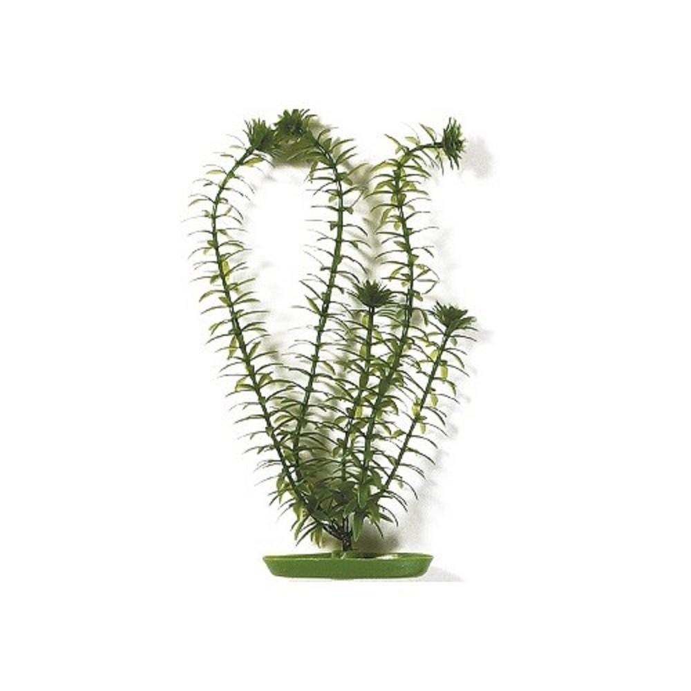 Rostlina Anacharis 13cm
