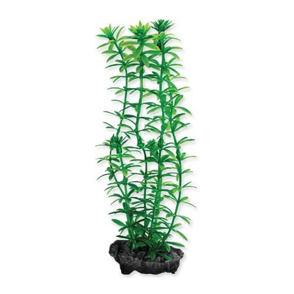Rostlina Anacharis Tetra S 15cm