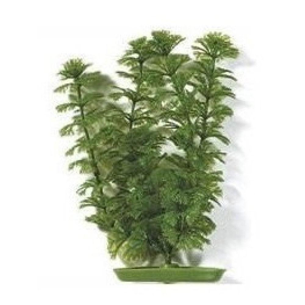 Rostlina Ambulia 20cm