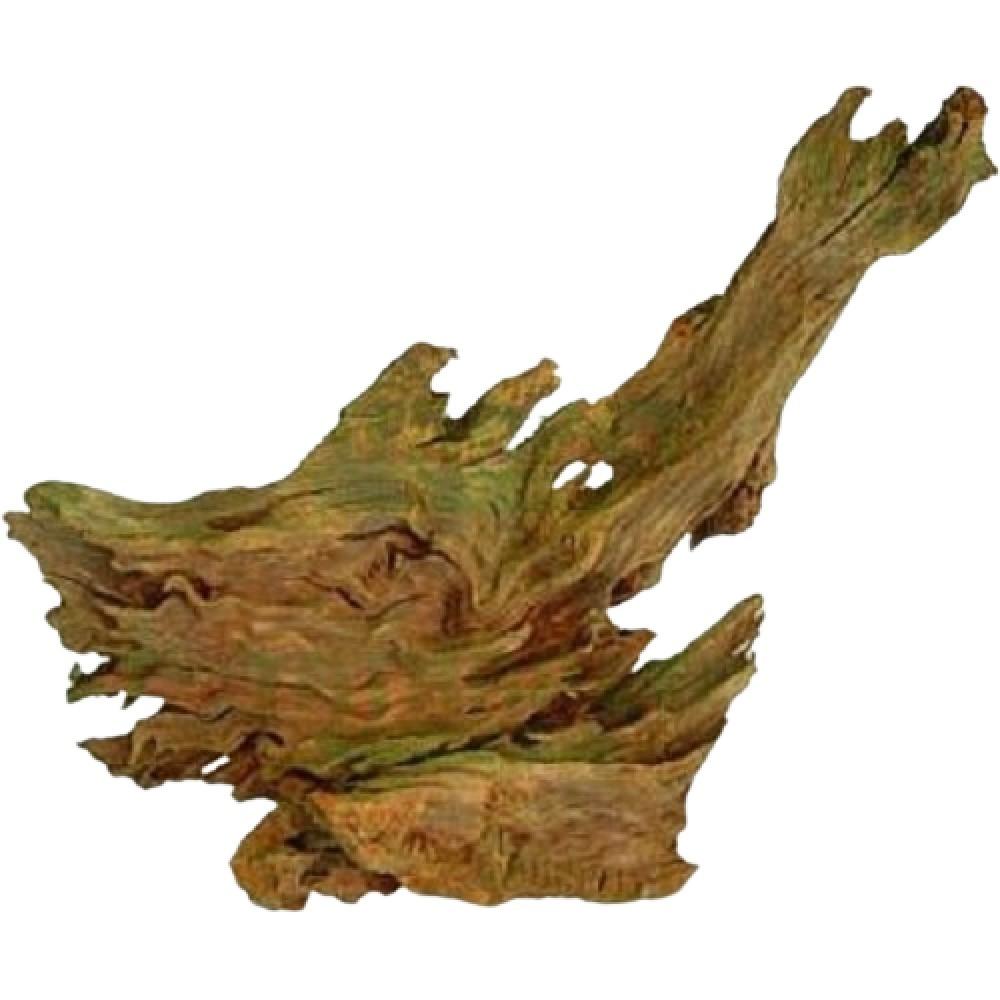 Kořen Jati 15-23cm